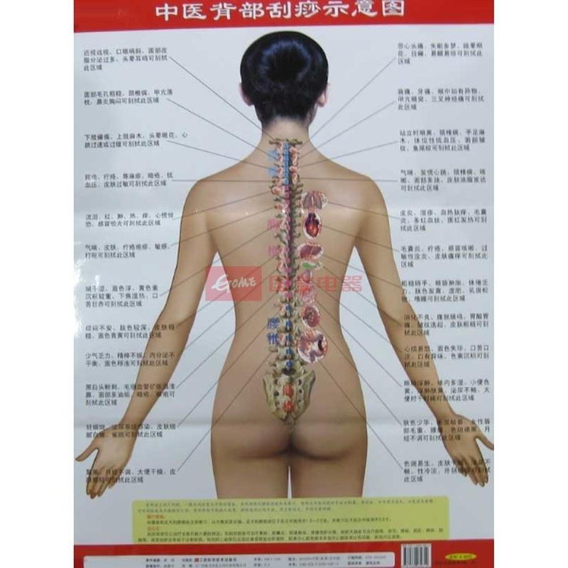 《中医背部刮痧示意图》()【简介|评价|摘要|在线