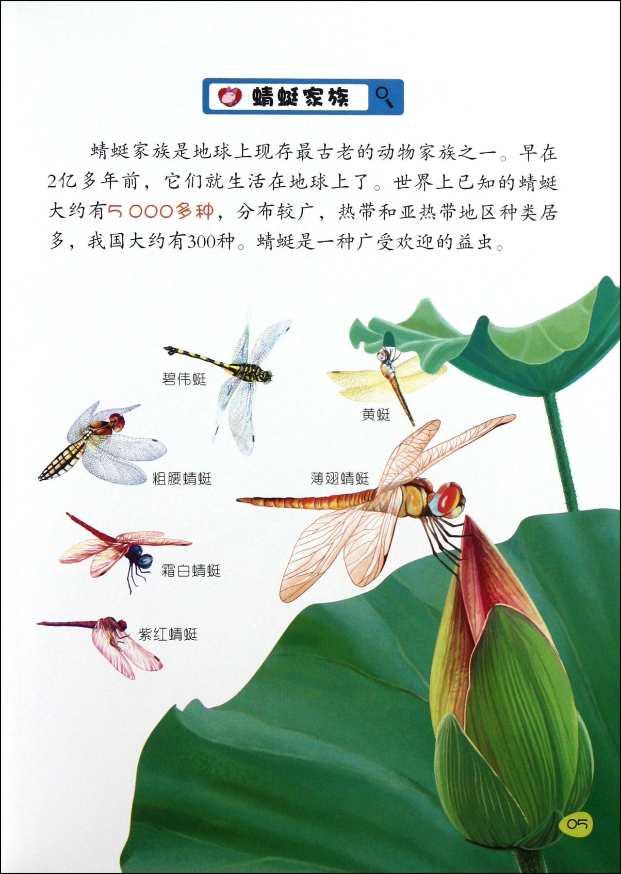 蜻蜓身体结构图片